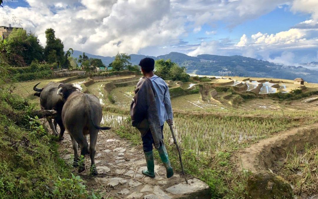 Die Reisterrassen und das GANZ NORMALE LEBEN