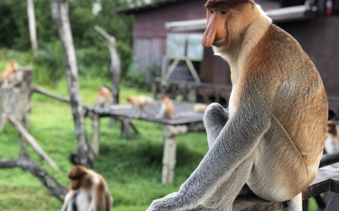 Borneo… Schöner kann Reisen kaum sein!
